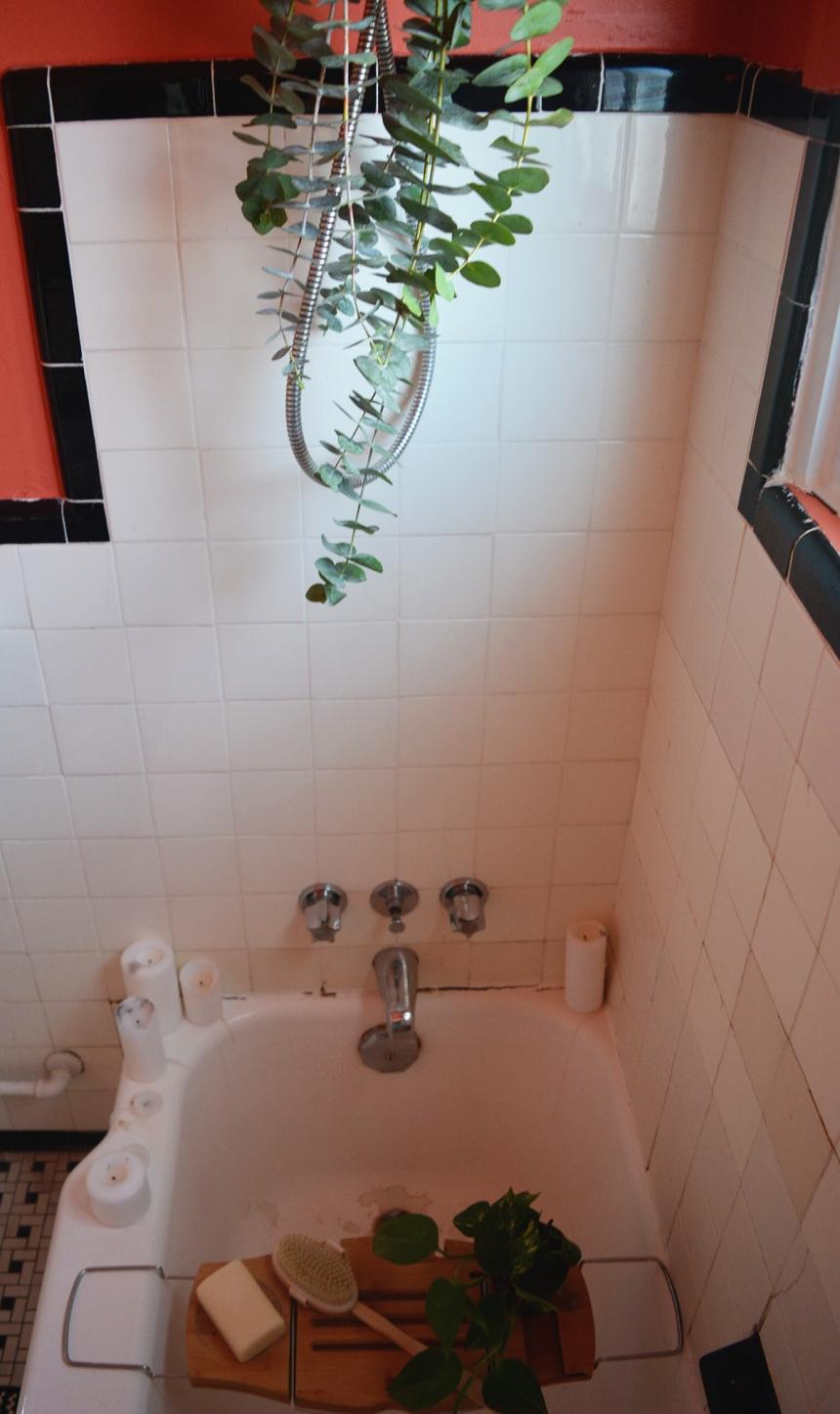 eucalyptus shower deco salle de bain douche spa maison detente