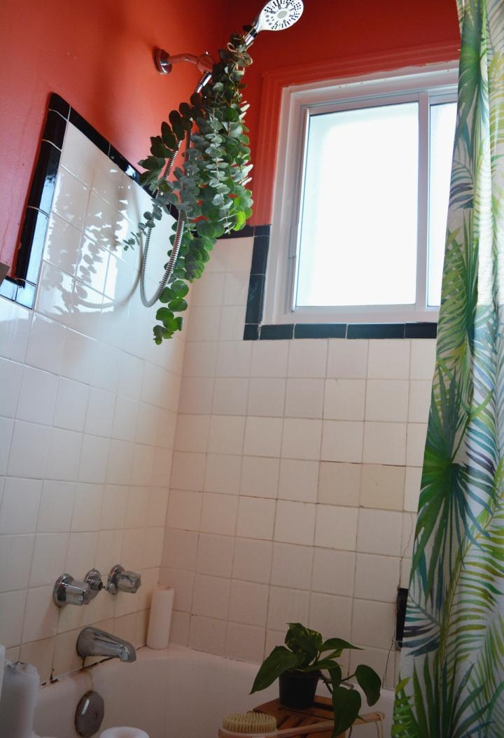 eucalyptus shower deco salle de bain douche